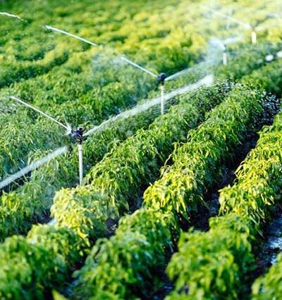 The Well-Known Benefits of an Irrigation System You Need to Know